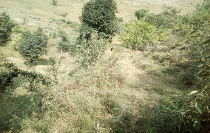 16 Bigha Land For Sale Rajgarh