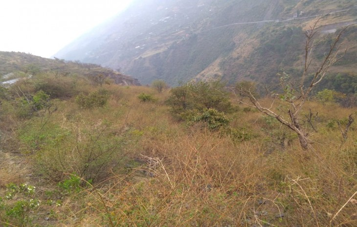 40 Bigha land For sale Chail Shimla