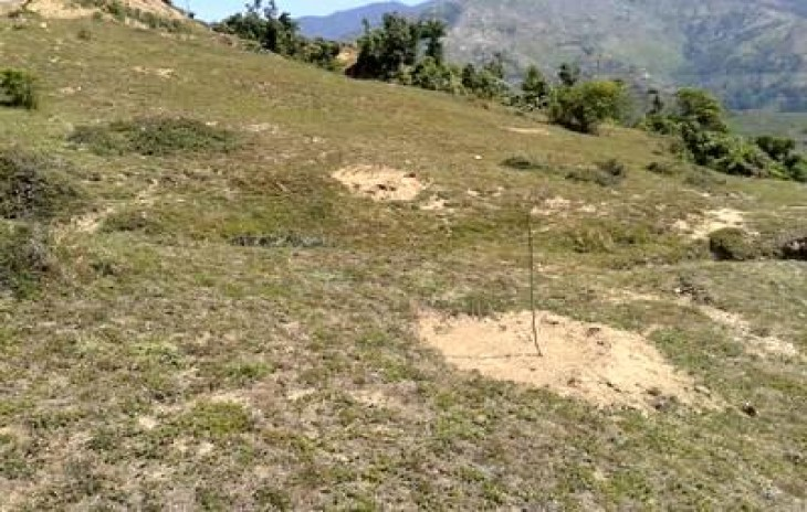 50 Bigha Orchard Land For Sale Noradhar