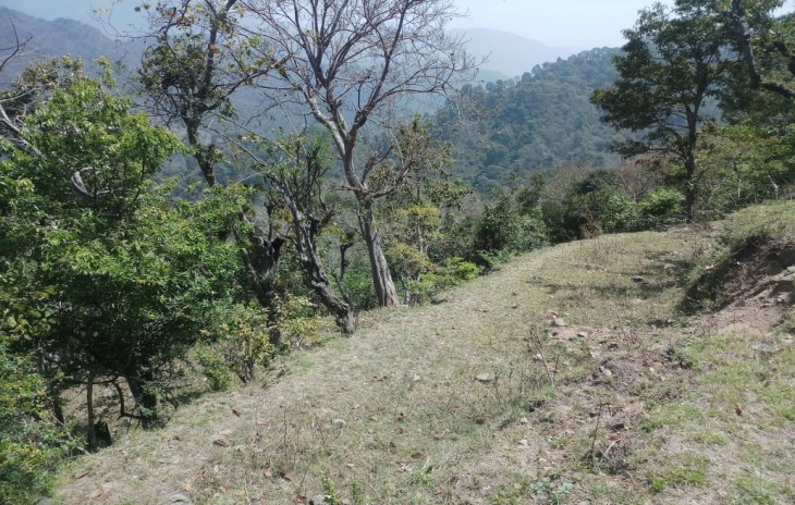 103 Bigha Land For Sale Sarah