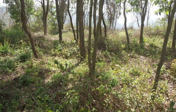60 Bigha Land for Sale Solan