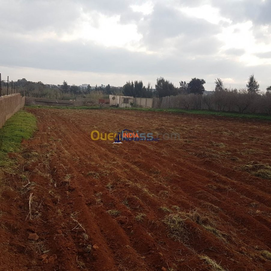 Farmland For Sale Mostaganem Hadjadj