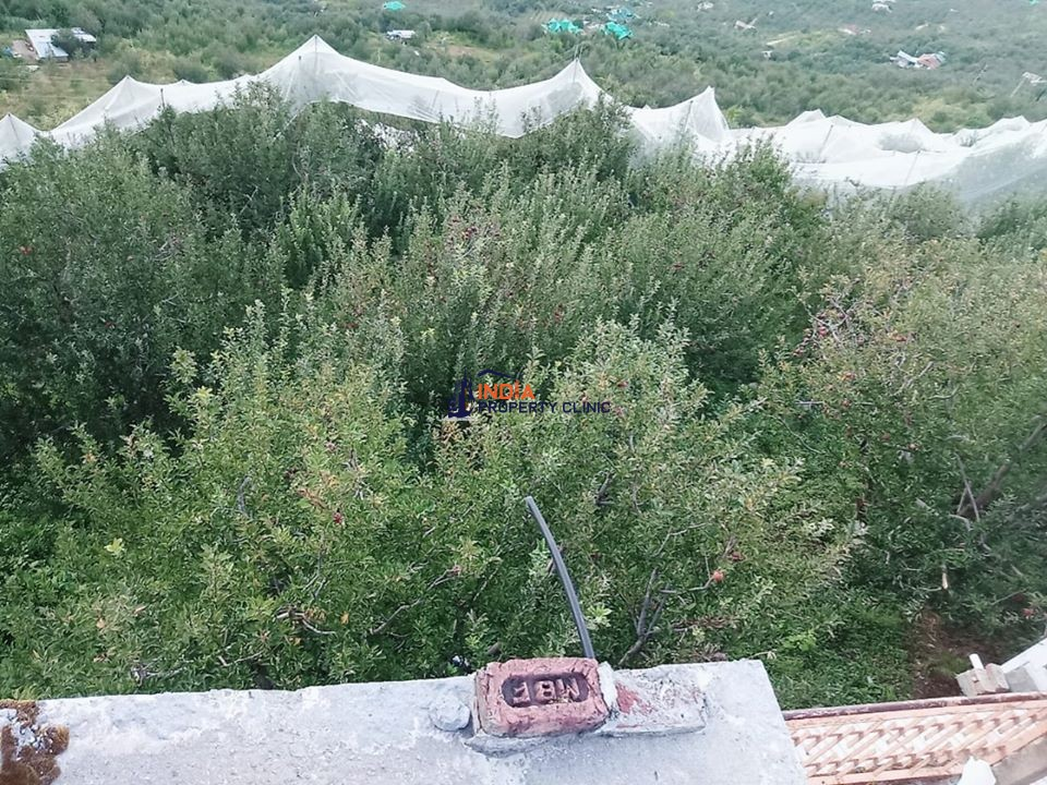 Apple Orchard for Sale in Hatkoti
