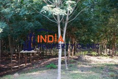 Land for Sale in Khokhea