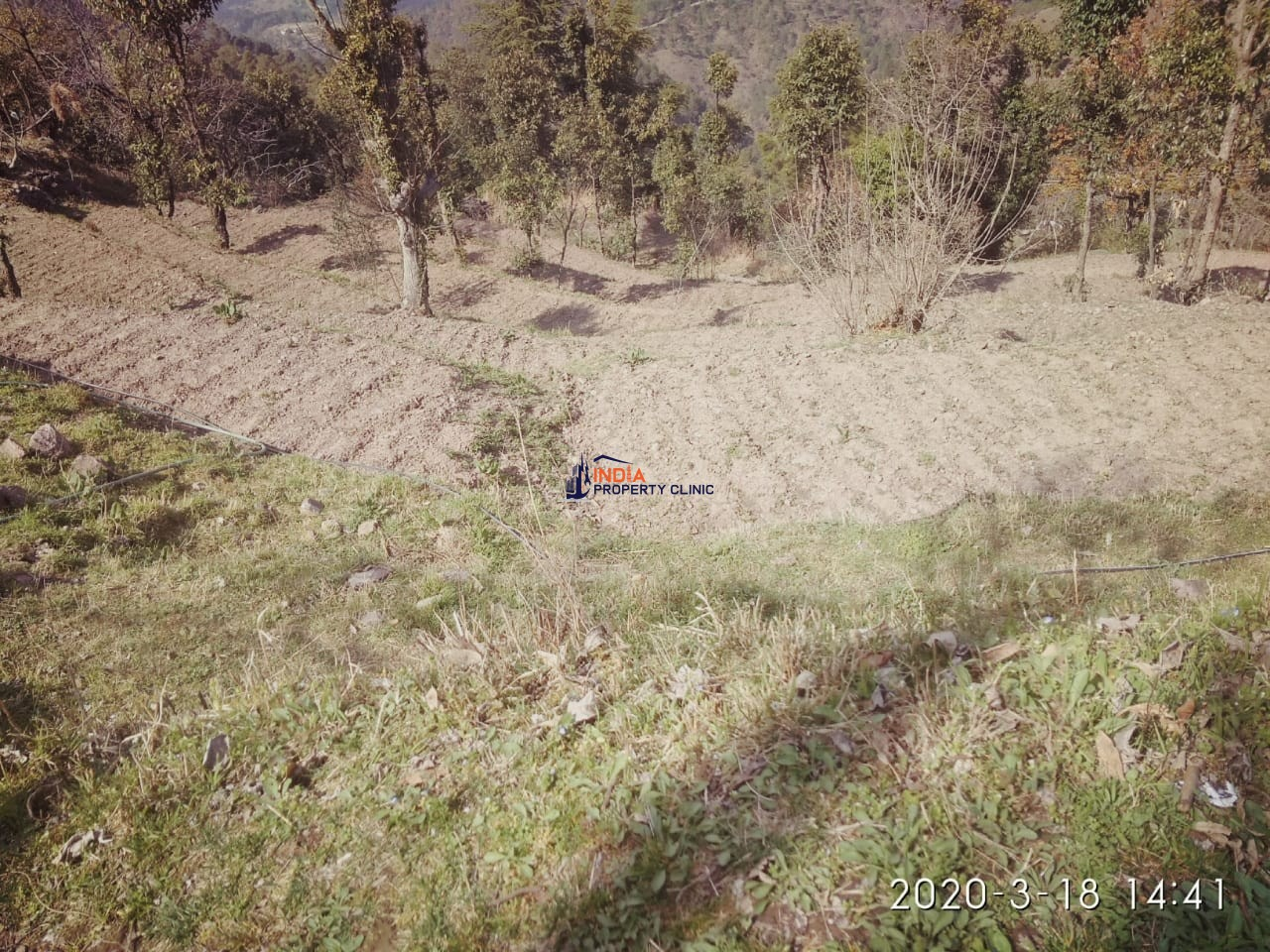Land for Lease in Chail