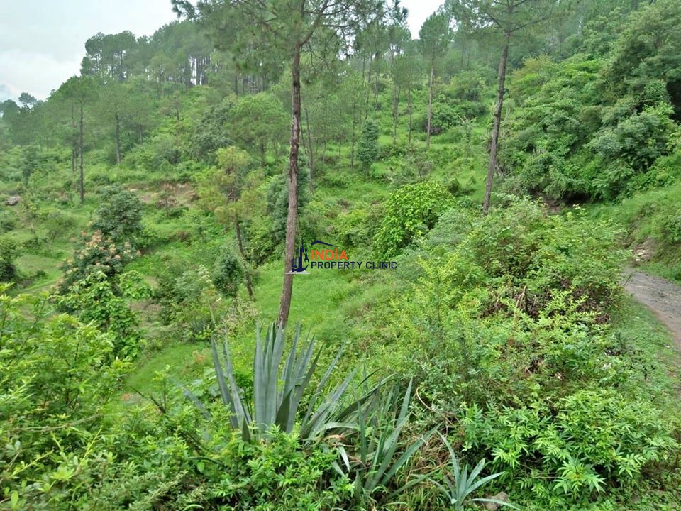 1 Bigha Land for Sale in Solan