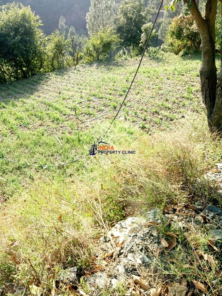 Agriculture Land For Sale Near Chail Janedghat.