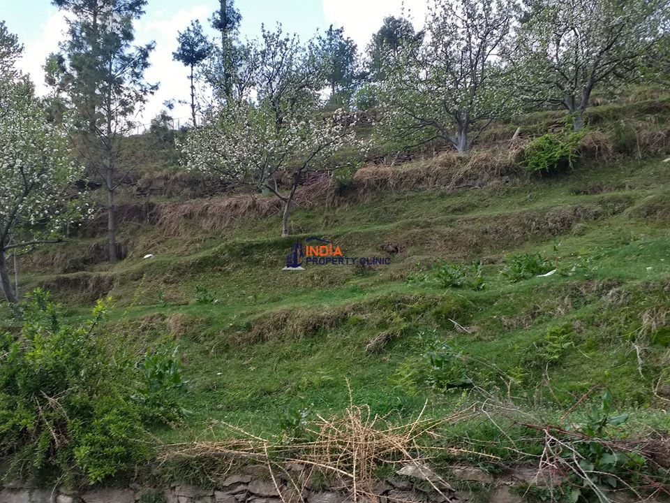18 Biswa Land for Sale Theog