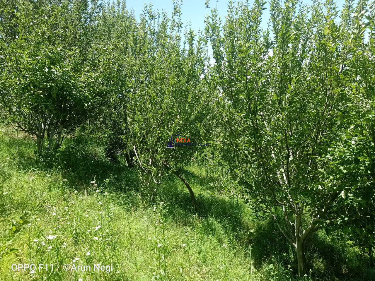 Orchard For Sale Near Shimla