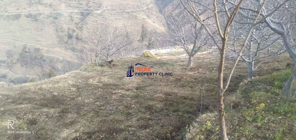 Buy Apple Orchard with house In Deha Shimla