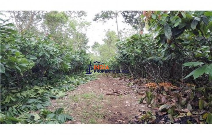 Agricultural Land for Sale in San Carlos