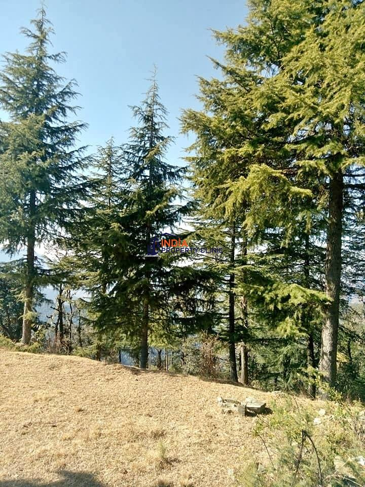5 Biswa Plot For Sale Chail